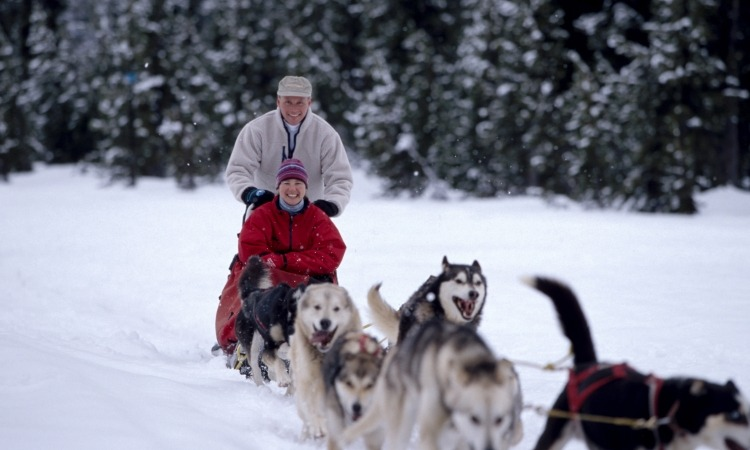 Couple being pulled by dogs on a dog sled