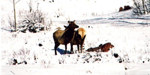 lifestyle-elk